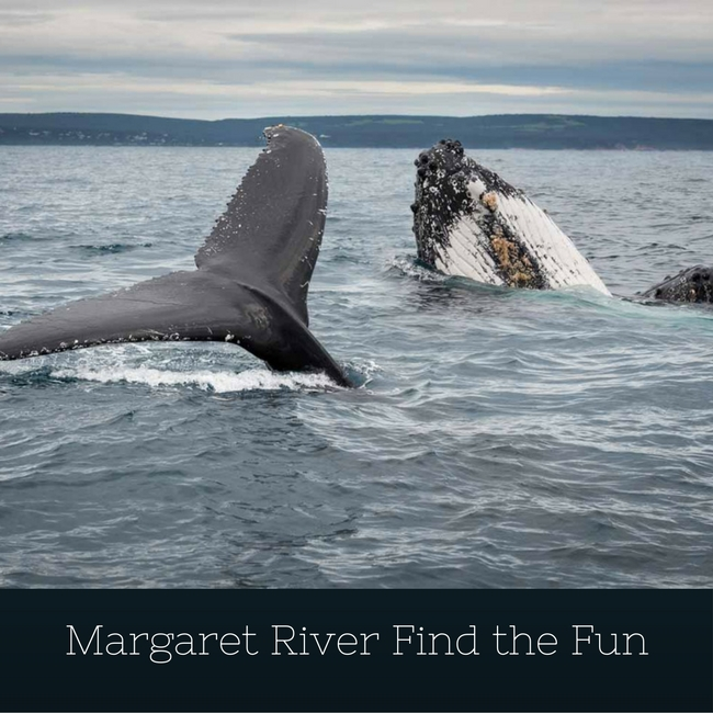 Margaret River Find the Fun App